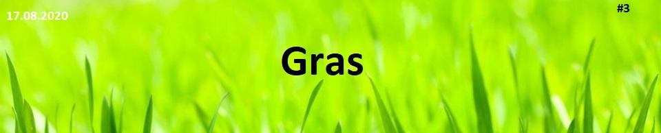 Sieger Gras Bote #3 Seite 1