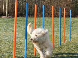 Tierwelt Ausgabe 1 Hundesport