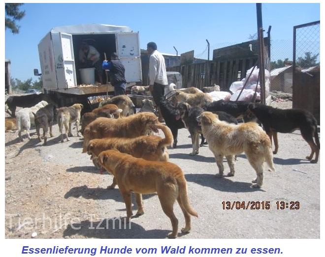 De Hochstädter Neues und Wissenswertes aus Hochstädten Tierschützer aus Hochstädten