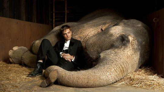 Filmkritiken Fluch der Karibik 4 & Wasser für die Elefanten Wasser für die Elefanten