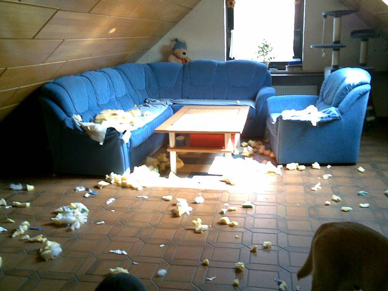 hund zerfetzt sofa