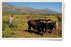 TAM-TAM Newsletter TAMTAM-Newsletter 2012-03 Branche