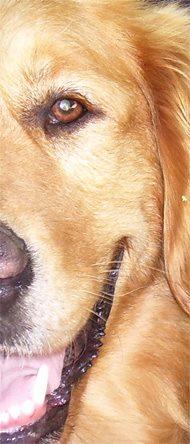 Tiertafel News 2014 Ausgabe Februar 2014 Schmerzen bei Hunden und Katzen erkennen, Teil 2
