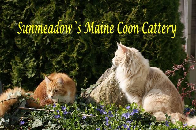 FCCI News 01/2017 FCCI NEWS 01/2017 Züchterportrait Sunmeadow's Maine Coon Cattery
